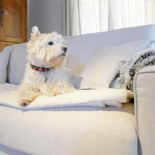 Réalisation du studio d'architecture et de décoration Skéa Designer. Fier sur son canapé, le petit terrier prend la pose.